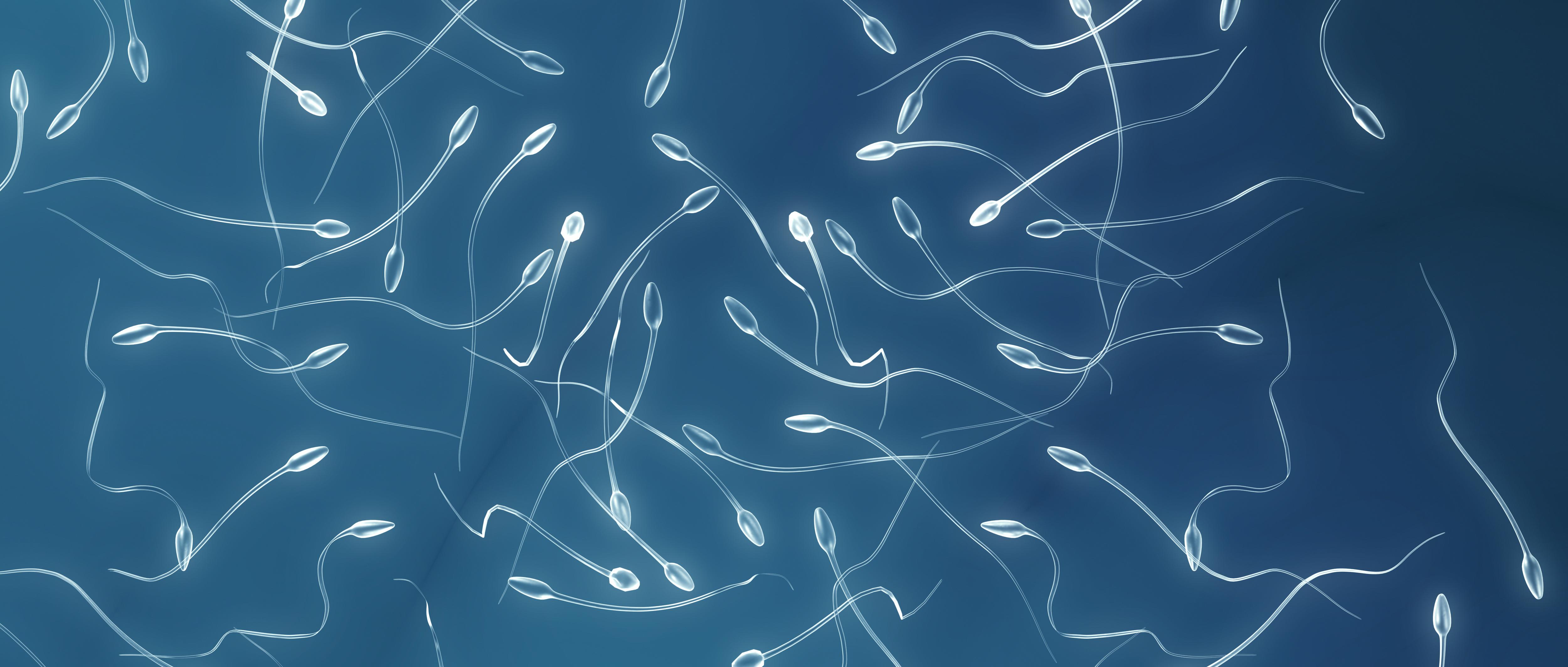 aliment pour augmenter spermatozoide
