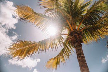 Soleil traversant un palmier